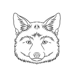 black and white sketch of fox head face of wild vector image