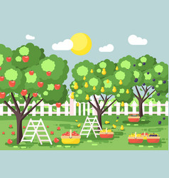 Cartoon harvesting ripe fruit vector