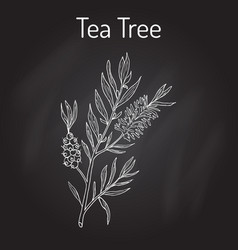 Collection of tea tree cosmetics and medical vector