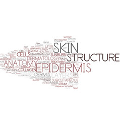 Epidermis word cloud concept vector