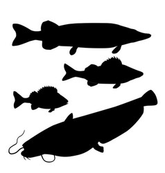 Freshwater predatory fish vector