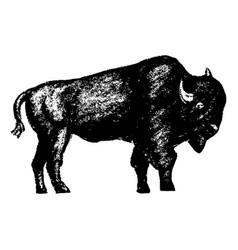 bison icon grunge style vector image vector image