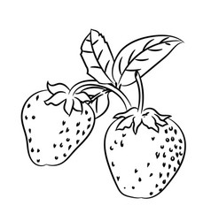 line drawing of strawberry -simple line vector image