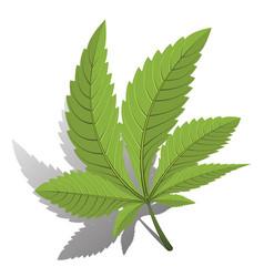cannabis green leaf logo vector image
