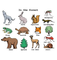 In forest vector