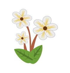 jasmine flower spring image vector image