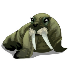 serious old walrus with large tusks isolated vector image vector image