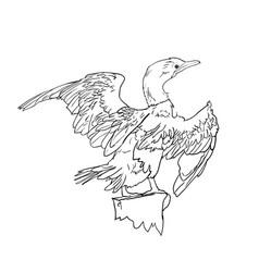 drawing of little cormorant bird vector image