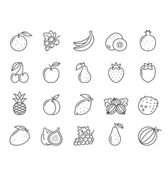 fruit berry food orange kiwi line icon set vector image