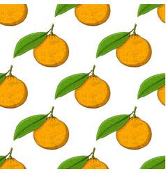 Mandarin orange hand drawn colored sketch as vector