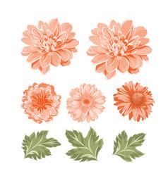 Set chrysanthemum flowers elements vector