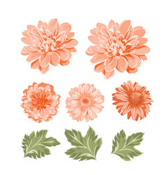 Set of chrysanthemum flowers elements vector