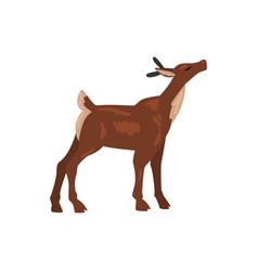 cute badeer animal side view vector image