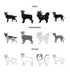 Dog breeds blackmonochromeoutline icons in set vector
