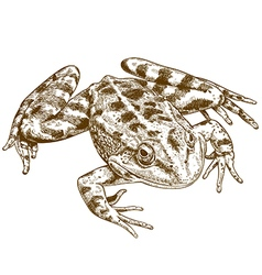 Engraving frog vector