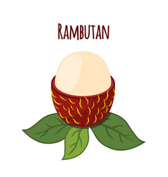rambutan tropical fruit exotic vitamin nutrition vector image