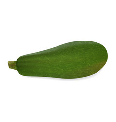 Zucchini on white background in realistic style vector