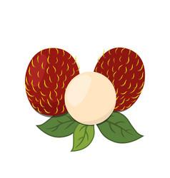rambutan tropical fruit exotic vitamin nutrition vector image