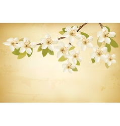 Spring branches with flowers on vintage background vector image