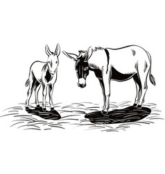 a donkey with her little puppy vector image