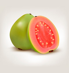 fresh green guava fruit vector image