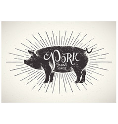 Graphic pig vector