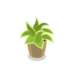 Green plant in pot isometric 3d icon vector
