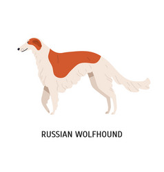 russian wolfhound or borzoi stunning lovely cute vector image