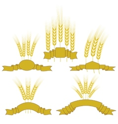 Wheats vector image