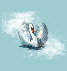 colored hand sketch floating swans vector image vector image