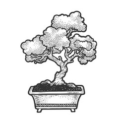 bonsai tree sketch engraving vector image