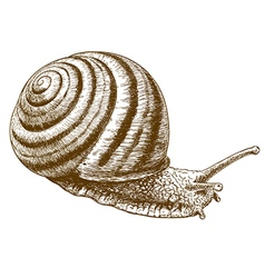 Engraving striped snail vector