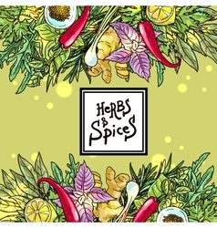 herbs and spices vector image