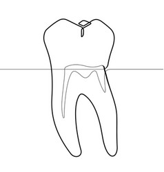 Molar human tooth continuous line graphic vector