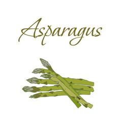 tasty veggies asparagus vector image