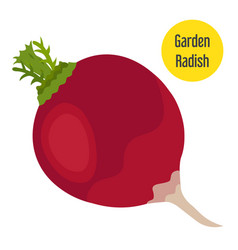 garden radish in flat style with golden label vector image