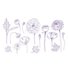 hand drawn outline floral elements set collection vector image vector image