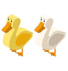 3d design for yellow and white ducks vector