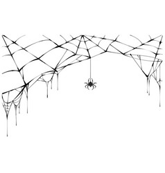 Black spider and torn web scary spiderweb of vector