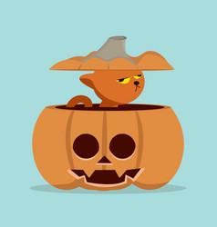 cartoon cat in pumpkin vector image