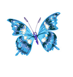 Colorful abstract watercolor butterfly on a white vector