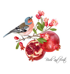 Finch pomegranate card vector