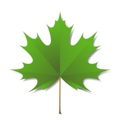 Maple green leaf vector