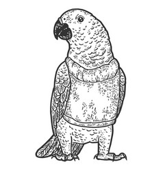 Poultry parrot in a sweater engraving vector