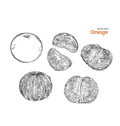 set of orange hand draw sketch vector image