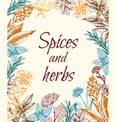 Vintage background with spices and herbs vector