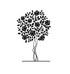 Rose bush vector image vector image
