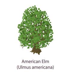 American elm icon flat style vector