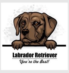 Brown labrador - peeking dog head dog vector