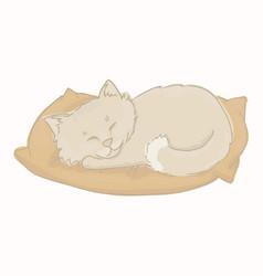 gray kitten sleeping on a pillow vector image
